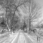 Sneeuwlaantje Buytentwist 2010